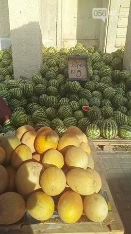 Опасно ли покупать дыни и арбузы в Днепре, фото-3