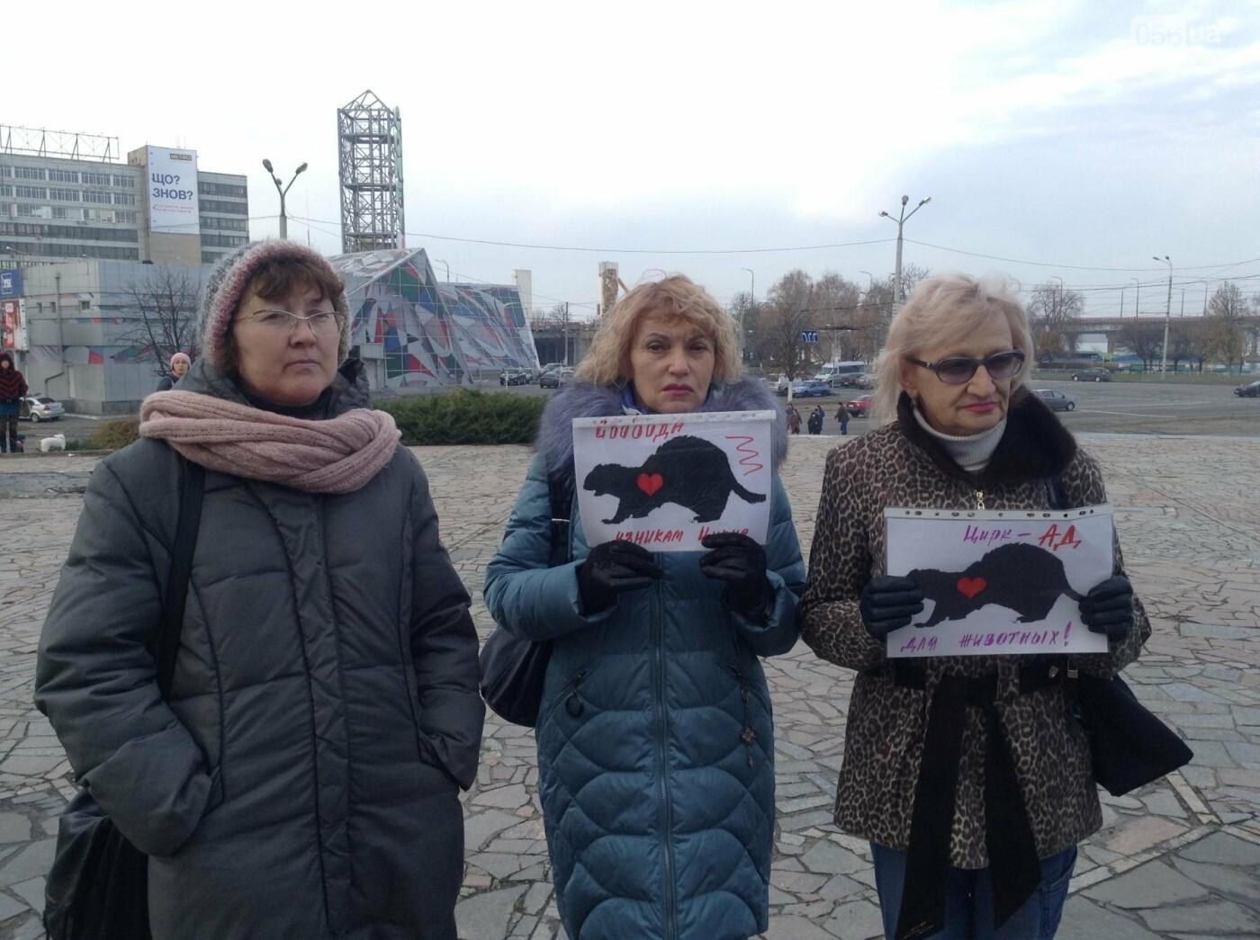 В Днепре зоозащитники пикетировали государственный цирк (ФОТО, ВИДЕО), фото-1