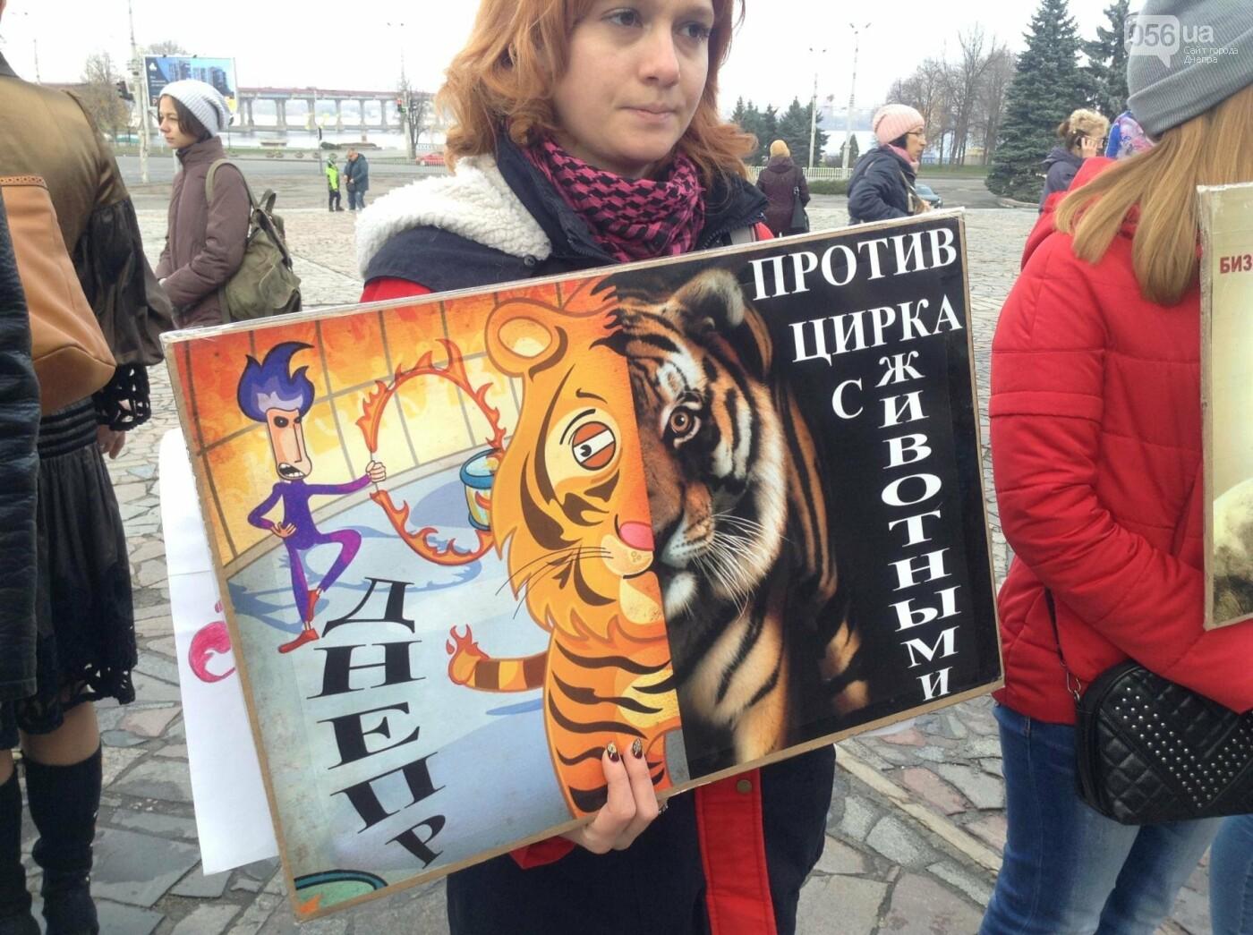 В Днепре зоозащитники пикетировали государственный цирк (ФОТО, ВИДЕО), фото-5