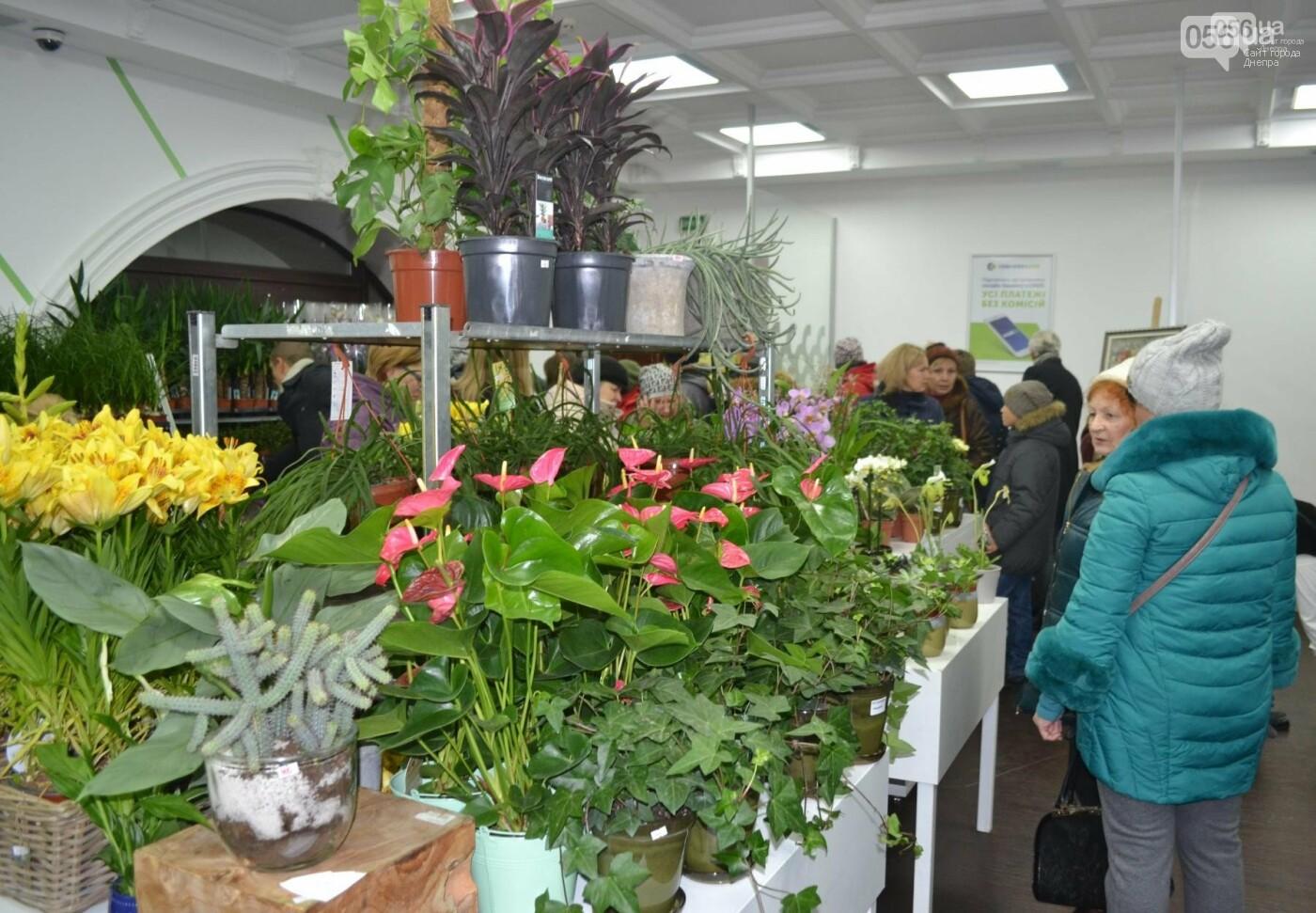 В Днепре благотворительная цветочная барахолка собрала почти 200 тыс грн, фото-1