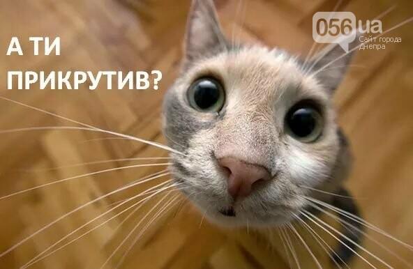 Реакция украинских соцсетей на флешмоб по экономии газа #прикрути: лучшие фотожабы, фото-10