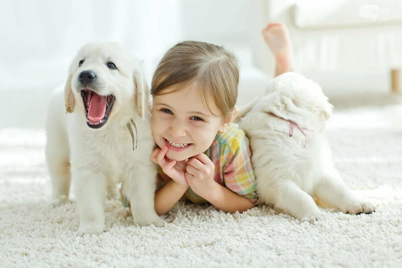 В Днепре состоится фестиваль домашних животных, фото-1