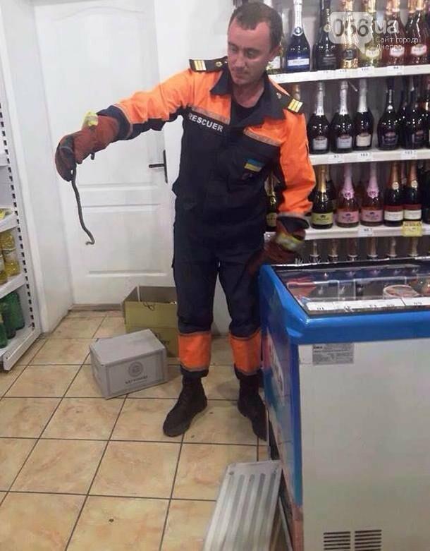 Змея в продуктовом магазине: как в Днепре четыре спасателя вылавливали пресмыкающееся, - ФОТО, фото-1