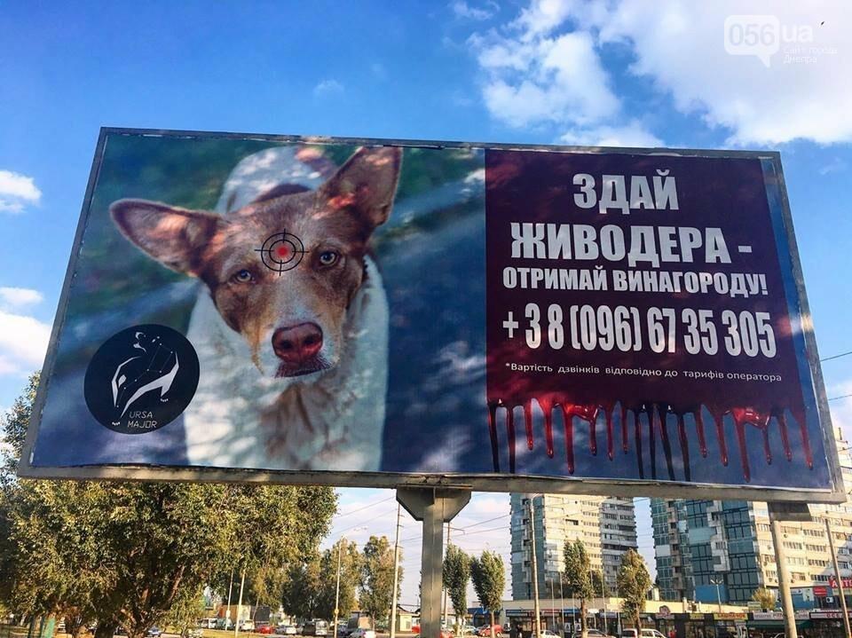 «Сдай живодера»: в Днепре появилась социальная реклама против насилия над животными, - ФОТО, фото-1