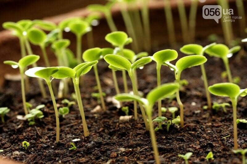 Протравители семян зерновых культур: как сделать правильный выбор, фото-1