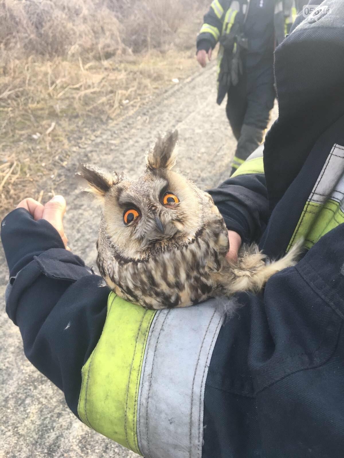 В Днепре в лесу из огня спасли сову, - ФОТО, фото-4