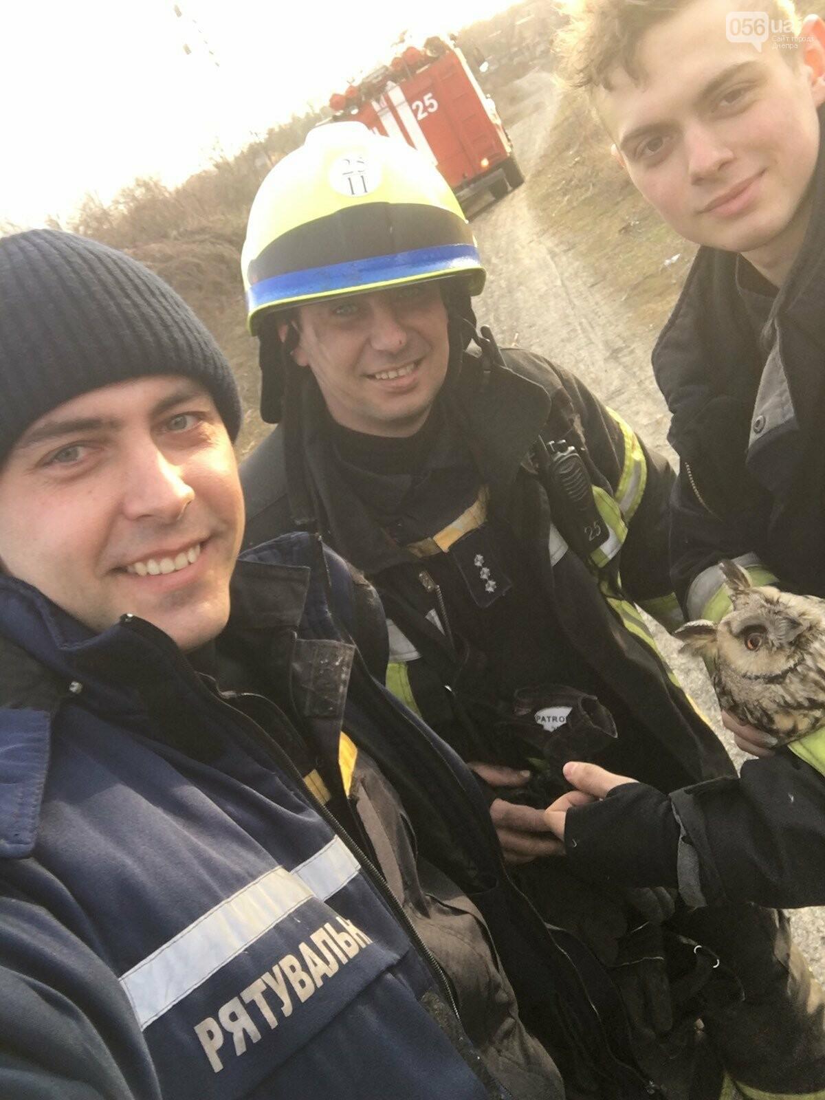 В Днепре в лесу из огня спасли сову, - ФОТО, фото-3