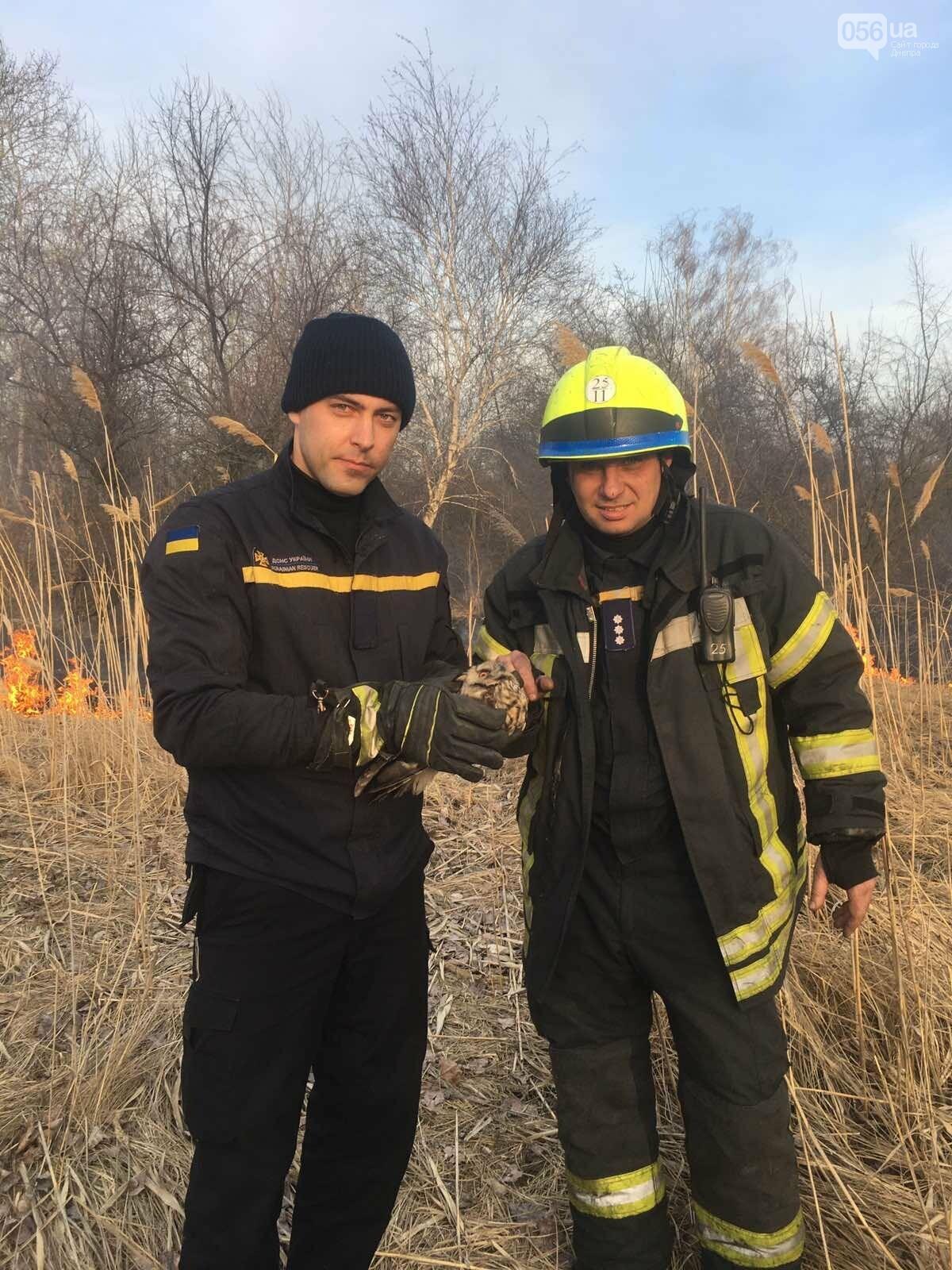 В Днепре в лесу из огня спасли сову, - ФОТО, фото-2