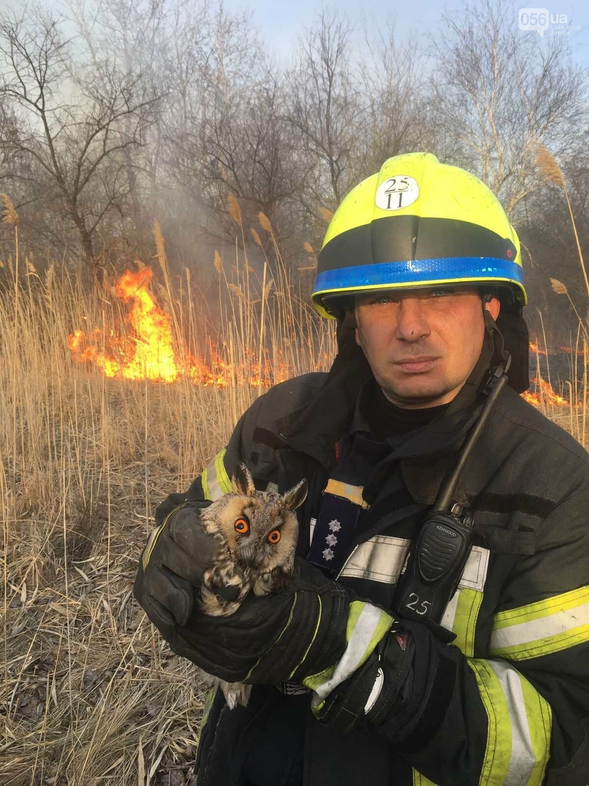 В Днепре в лесу из огня спасли сову, - ФОТО, фото-1