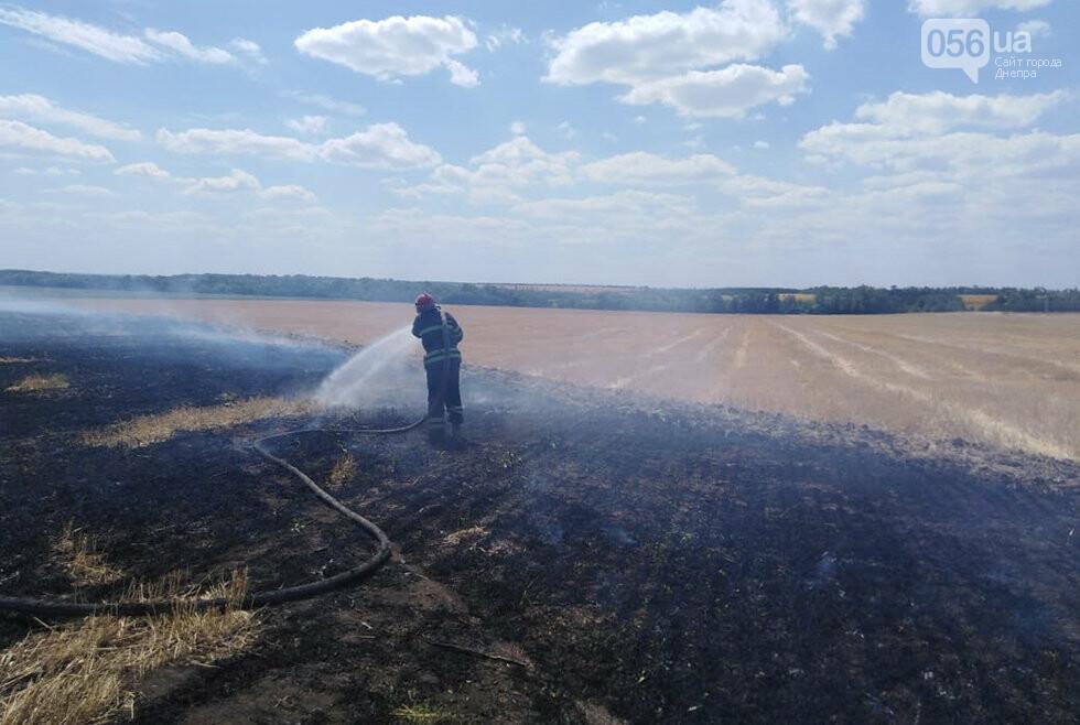 За ночь на Днепропетровщине потушили 68 возгораний в лесах и полях, - ФОТО, фото-5