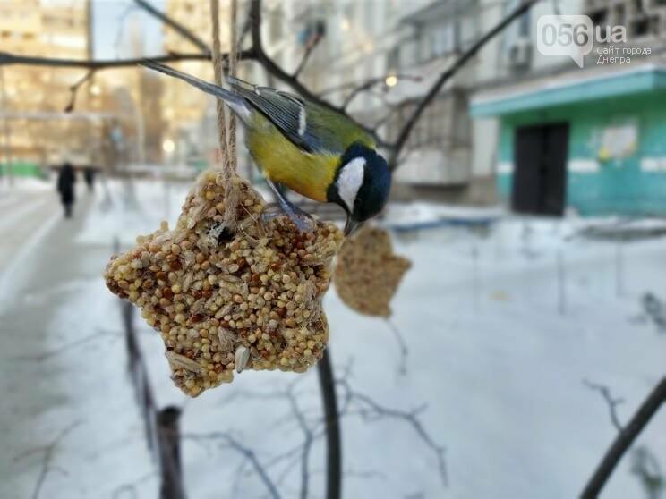 Покорми синичку: как днепрянам сделать экологичную кормушку своими руками, - ИНСТРУКЦИЯ, фото-1