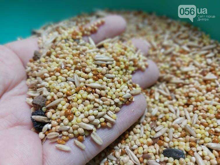 Покорми синичку: как днепрянам сделать экологичную кормушку своими руками, - ИНСТРУКЦИЯ, фото-8