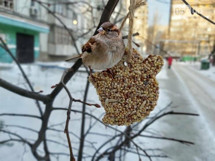 Покорми синичку: как днепрянам сделать экологичную кормушку своими руками, - ИНСТРУКЦИЯ, фото-18