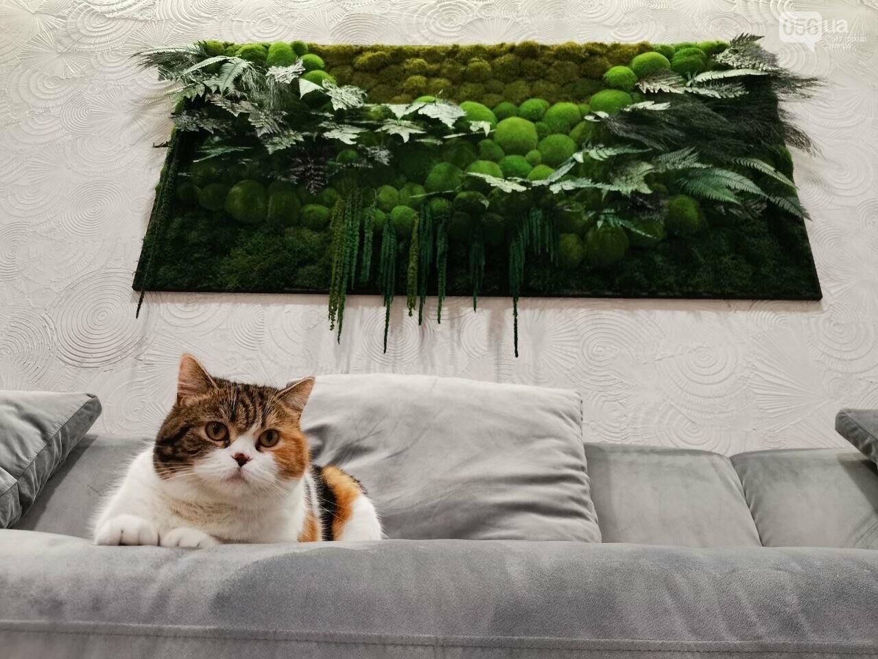 Днепрянин «рисует» картины мхом: как одна картина привела к возникновению своего дела, фото-6