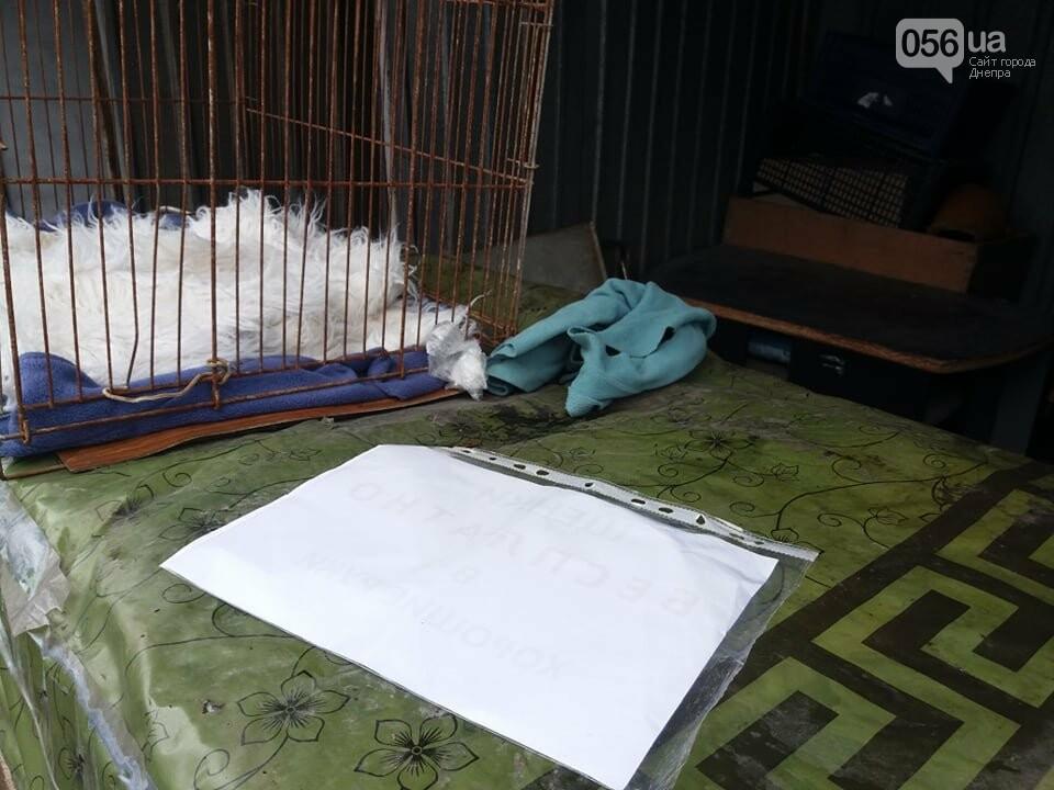 В Днепре стартовала глобальная акция по уничтожению незаконной продажи животных, фото-5
