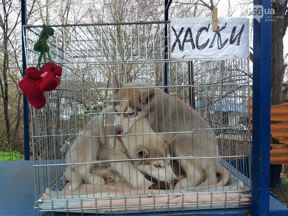 В Днепре стартовала глобальная акция по уничтожению незаконной продажи животных, фото-4