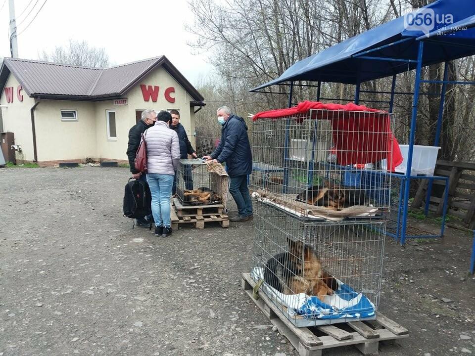 В Днепре стартовала глобальная акция по уничтожению незаконной продажи животных, фото-6