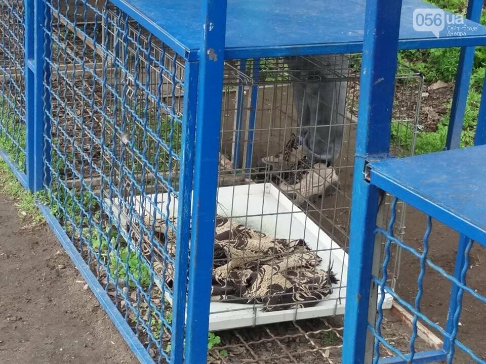 В Днепре стартовала глобальная акция по уничтожению незаконной продажи животных, фото-7