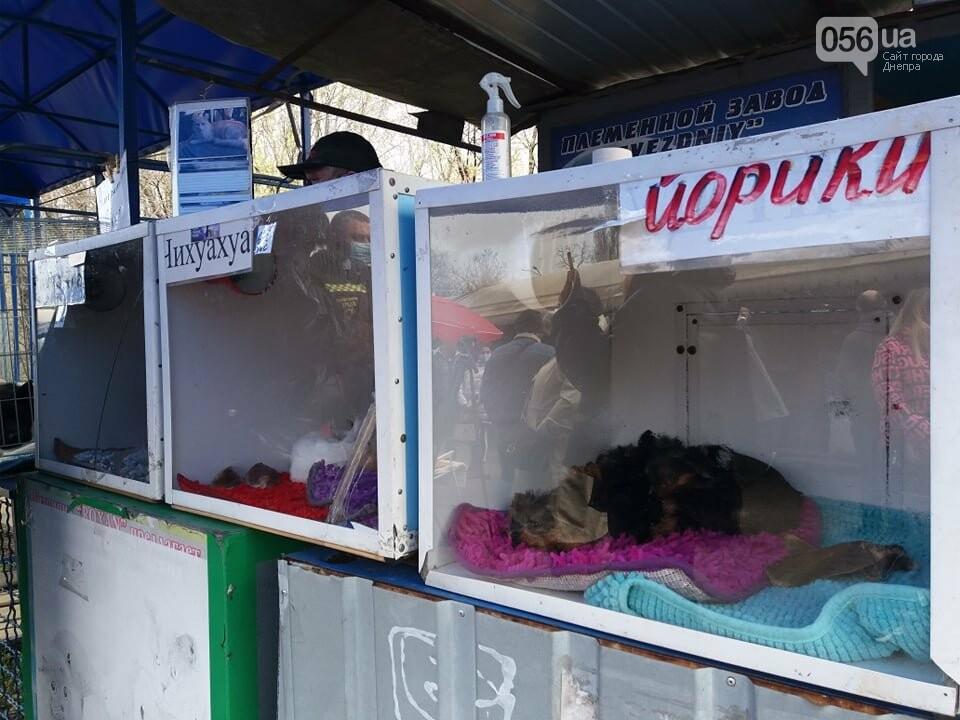 В Днепре стартовала глобальная акция по уничтожению незаконной продажи животных, фото-9