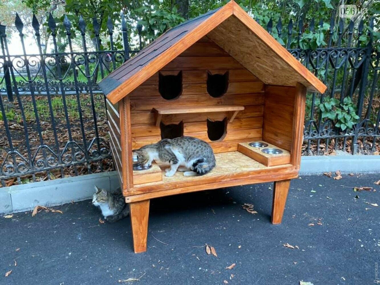 В Днепре и области у бродячих кошек есть личное жилье, - ФОТО, фото-2
