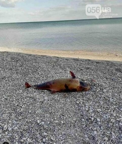 На море, куда ездят большинство днепрян, нашли жуткие находки, - ФОТО 18+, фото-3