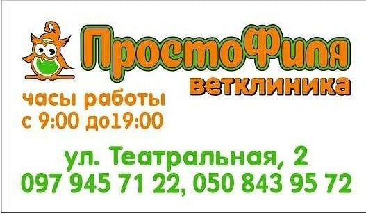 """Ветеринарная клиника """"ПростоФиля"""", фото-1"""