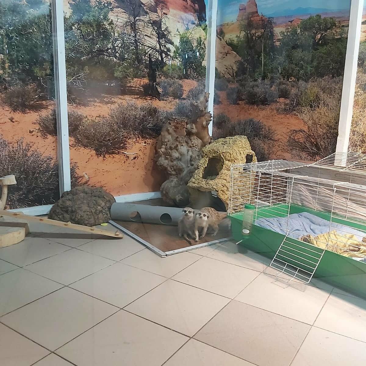 Сурикаты - Трогательный зоопарк в Днепре