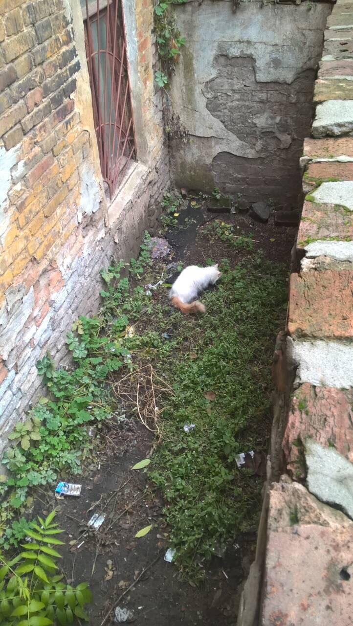 Минутка добра: днепровские спасатели вытащили кошку из ямы (ФОТО), фото-2