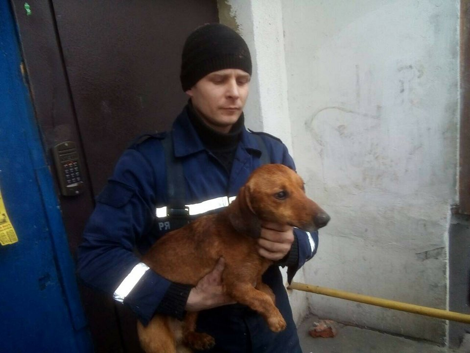 Минутка добра: как на Днепропетровщине пожарные спасали таксу (ФОТО) , фото-1