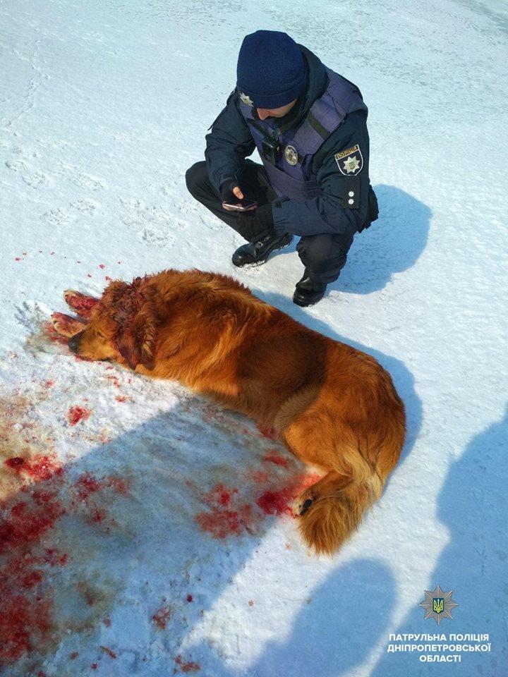 В Днепре неизвестные расстреляли собаку (ФОТО), фото-1