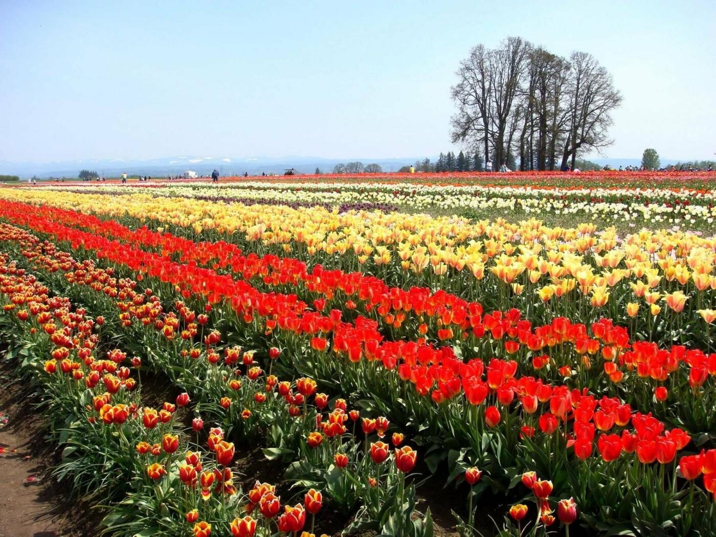 Букет к 8 марта: почем продают в Днепре цветы в преддверии праздника (ФОТО) , фото-1