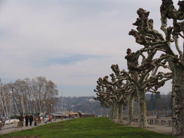 Центральные улицы Днепра засадят экзотическими деревьями (ФОТО), фото-1
