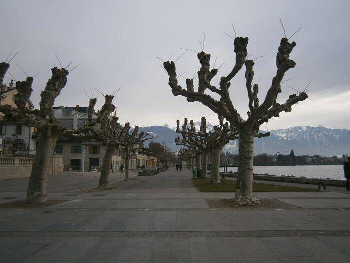 Центральные улицы Днепра засадят экзотическими деревьями (ФОТО), фото-2