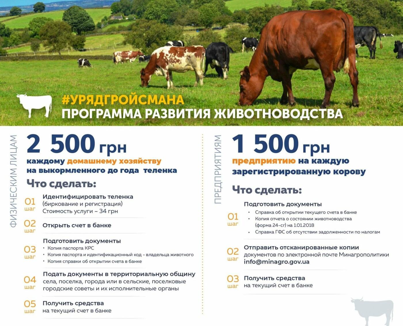 Какую правительственною помощь можно получить на селе для развития хозяйства? , фото-6