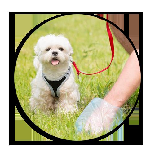 «Об этой проблеме не принято говорить»: в Днепре создали инициативу «Гав-Прибрав», направленную на уборку за собаками на улицах города, фото-1