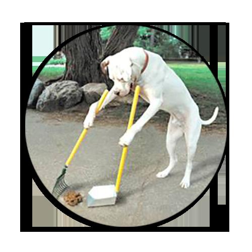 «Об этой проблеме не принято говорить»: в Днепре создали инициативу «Гав-Прибрав», направленную на уборку за собаками на улицах города, фото-2