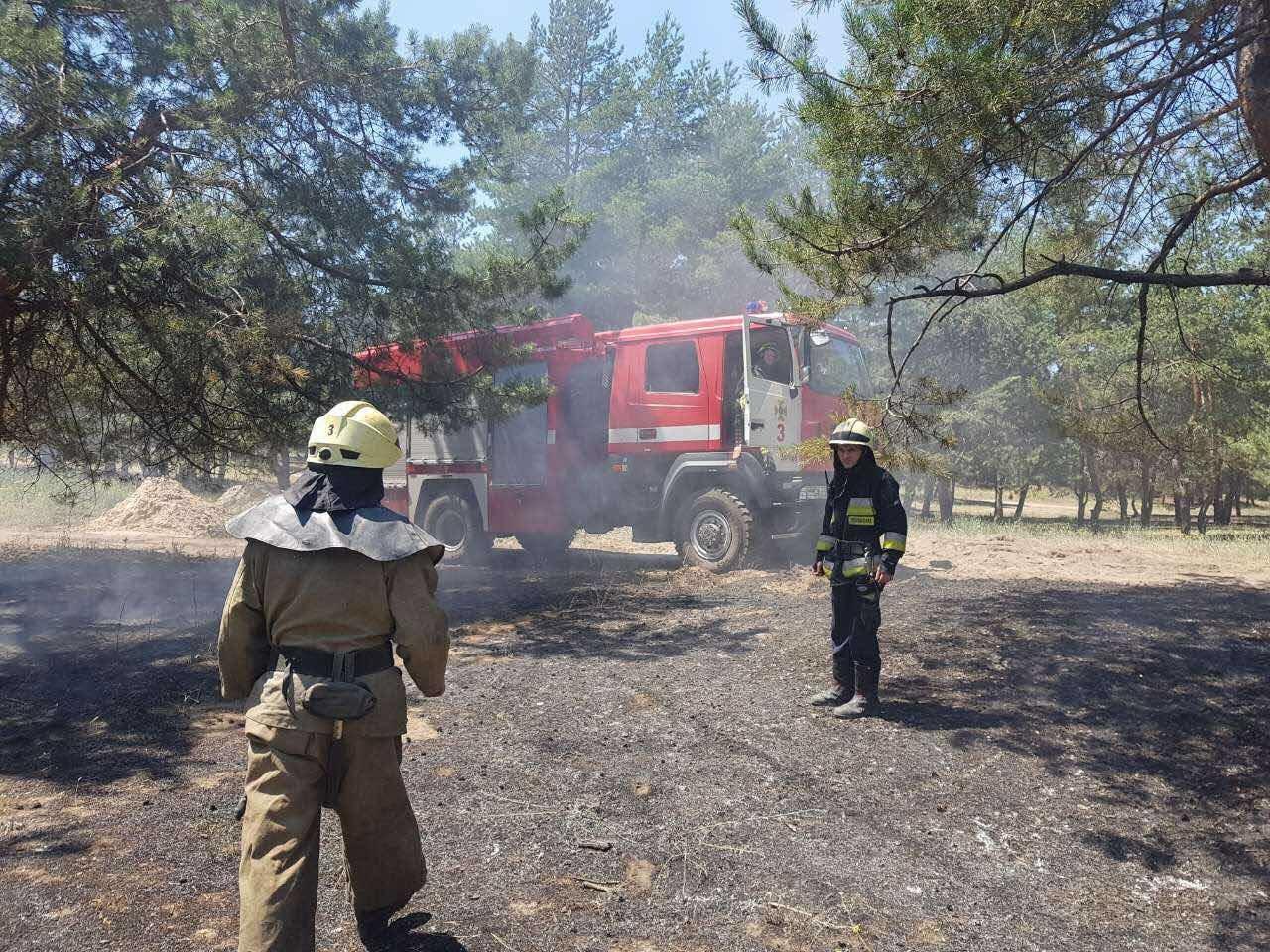 В Днепре горел хвойный лес: едва не пострадали люди, - ФОТО, фото-5