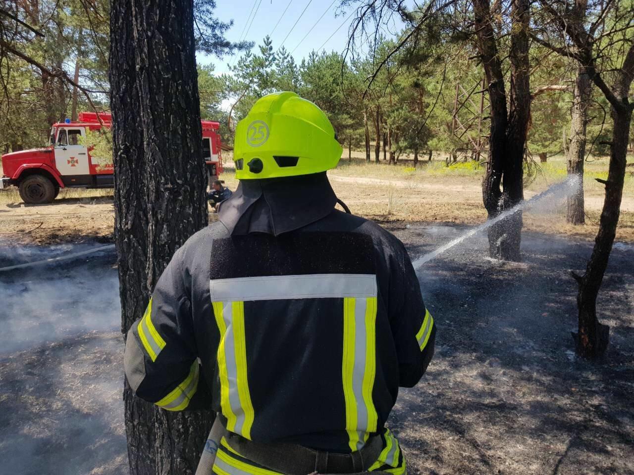 В Днепре горел хвойный лес: едва не пострадали люди, - ФОТО, фото-1