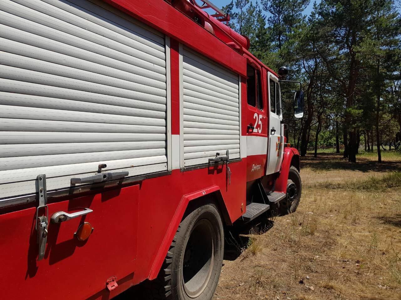 В Днепре горел хвойный лес: едва не пострадали люди, - ФОТО, фото-4