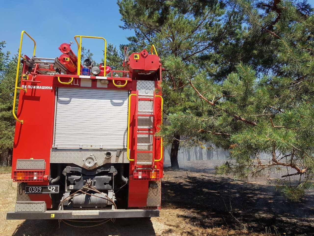 В Днепре горел хвойный лес: едва не пострадали люди, - ФОТО, фото-6