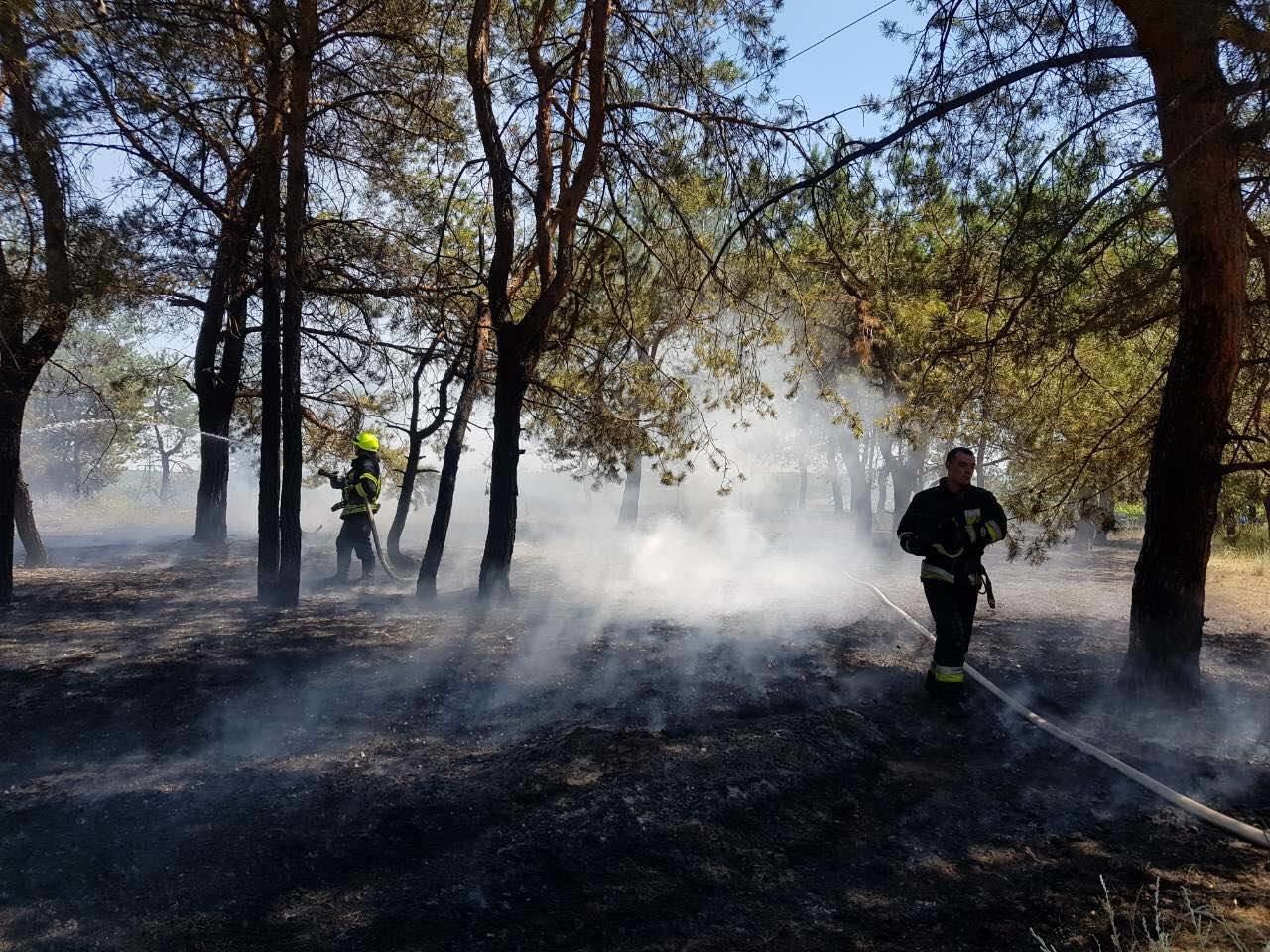 В Днепре горел хвойный лес: едва не пострадали люди, - ФОТО, фото-2