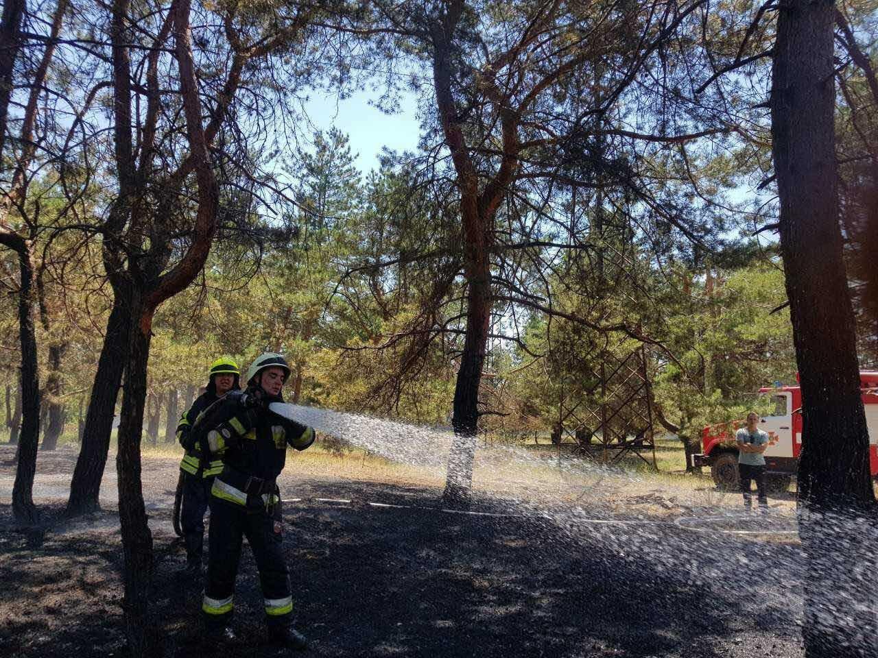 В Днепре горел хвойный лес: едва не пострадали люди, - ФОТО, фото-3