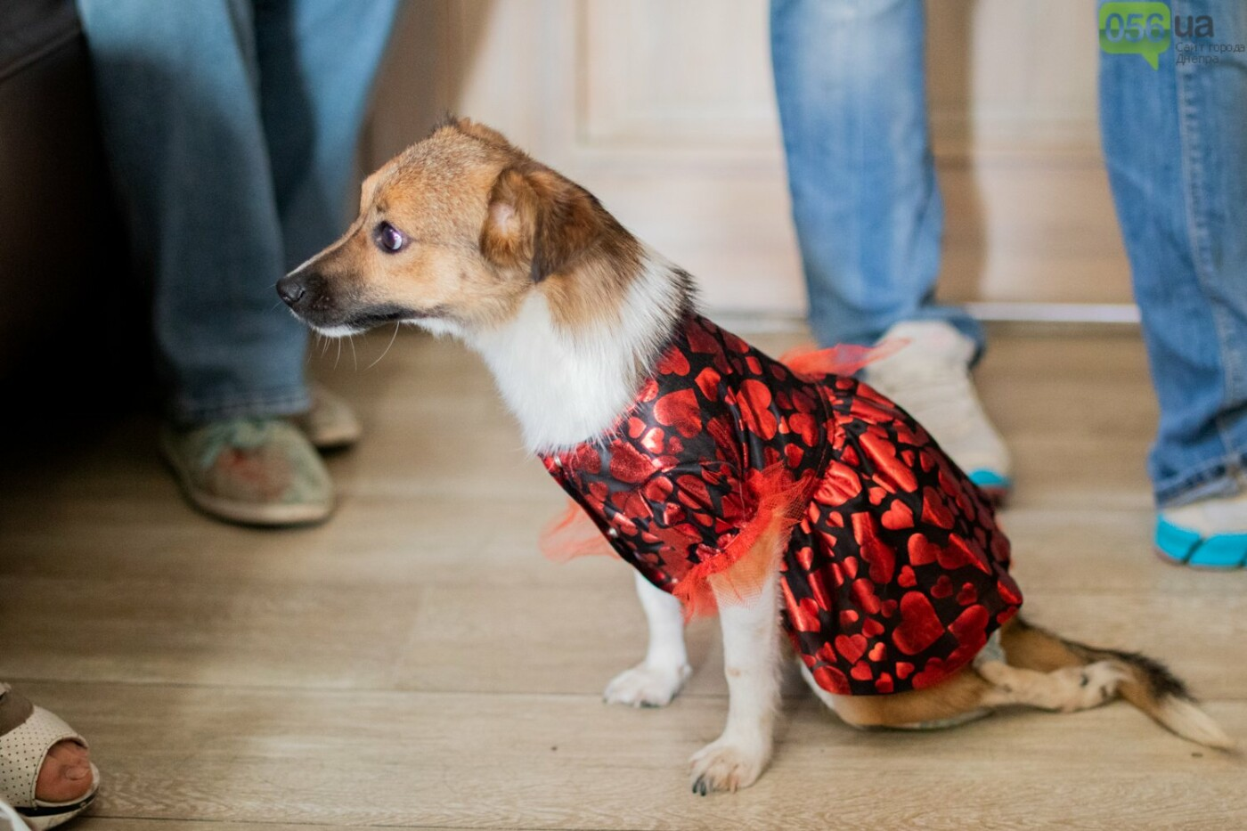 Собаки, кошки и морские свинки: как в Днепре прошел фестиваль домашних животных, - ФОТОРЕПОРТАЖ, фото-2