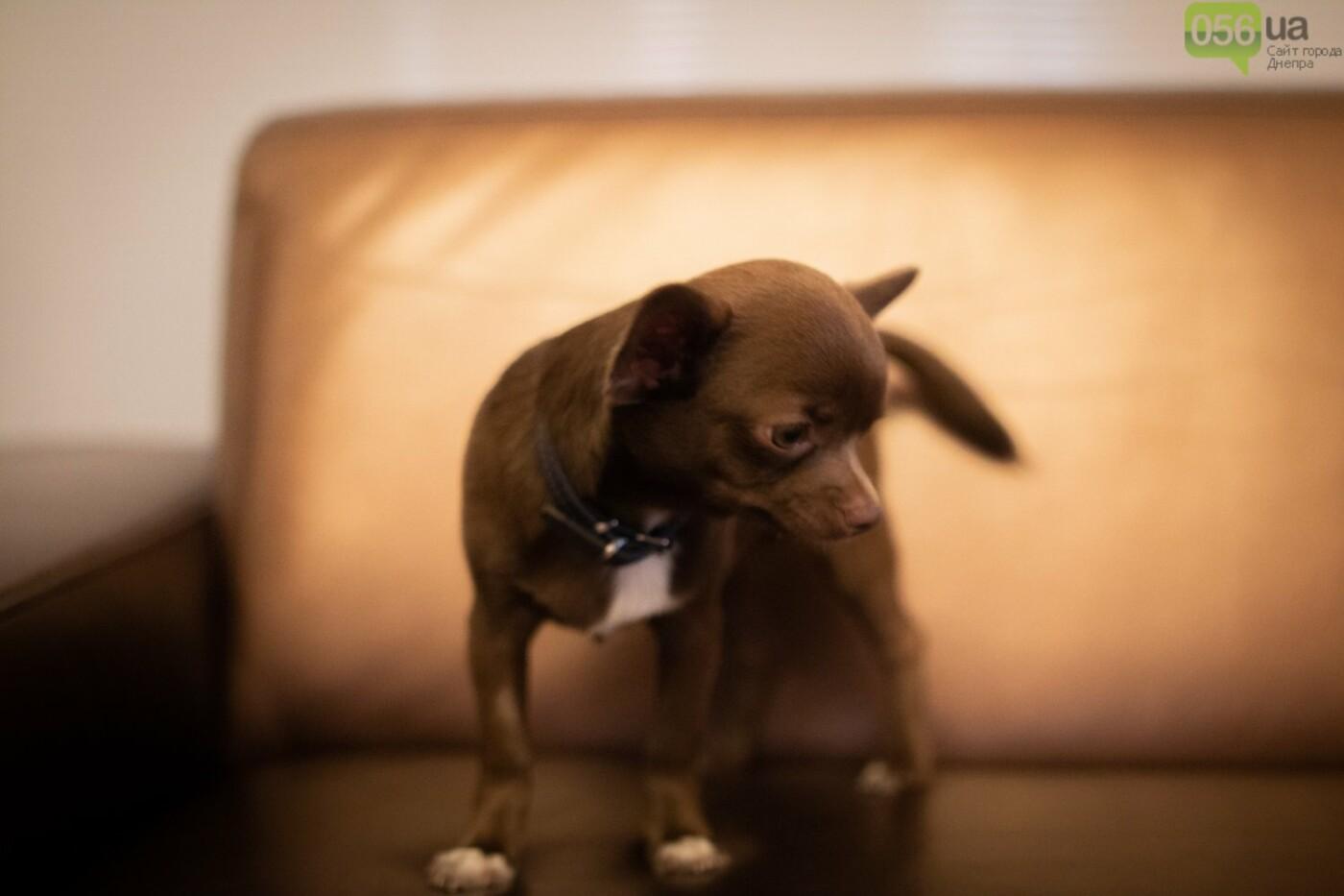 Собаки, кошки и морские свинки: как в Днепре прошел фестиваль домашних животных, - ФОТОРЕПОРТАЖ, фото-6