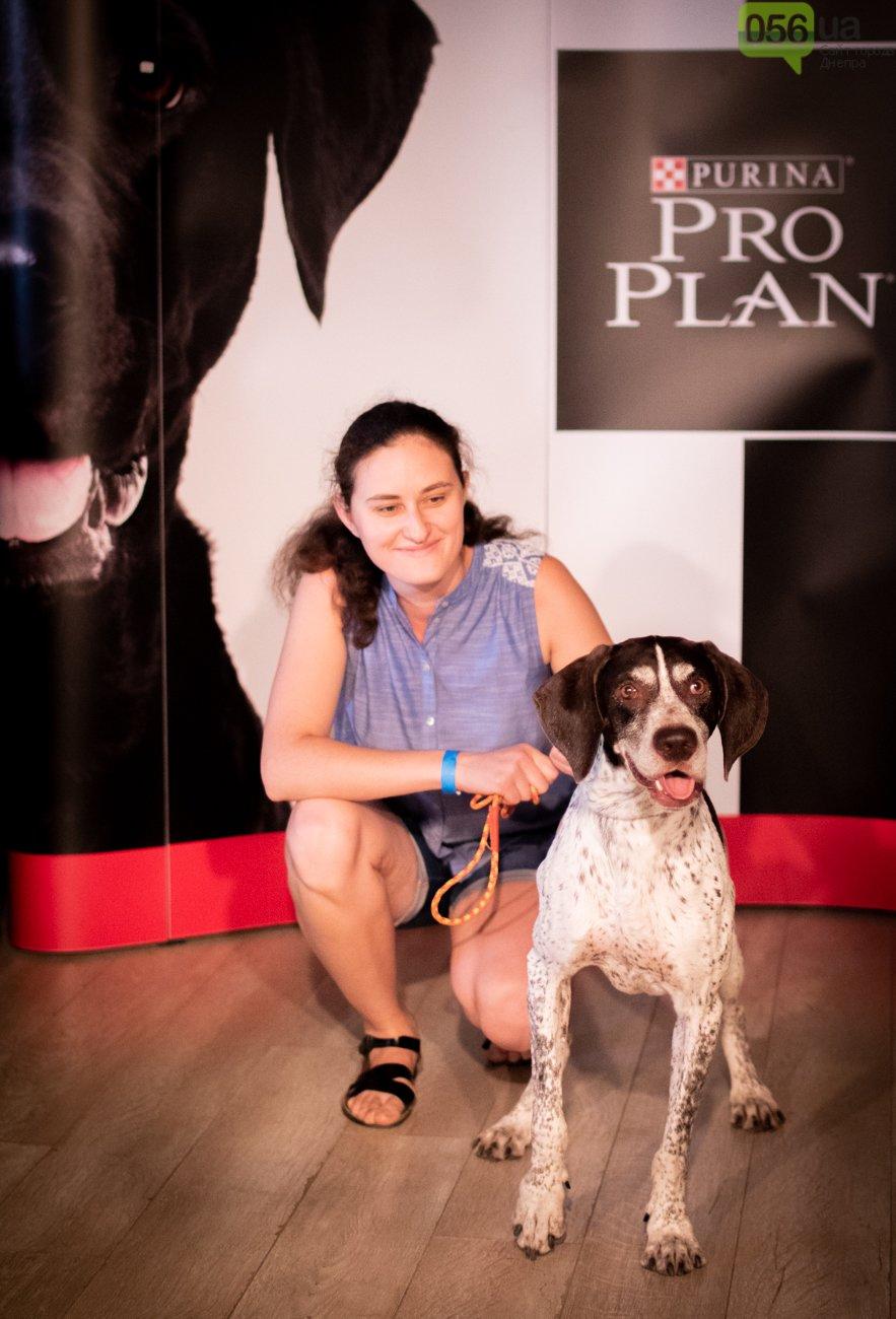 Собаки, кошки и морские свинки: как в Днепре прошел фестиваль домашних животных, - ФОТОРЕПОРТАЖ, фото-8