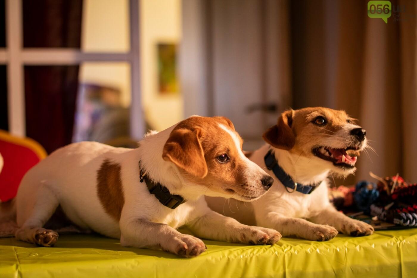 Собаки, кошки и морские свинки: как в Днепре прошел фестиваль домашних животных, - ФОТОРЕПОРТАЖ, фото-14