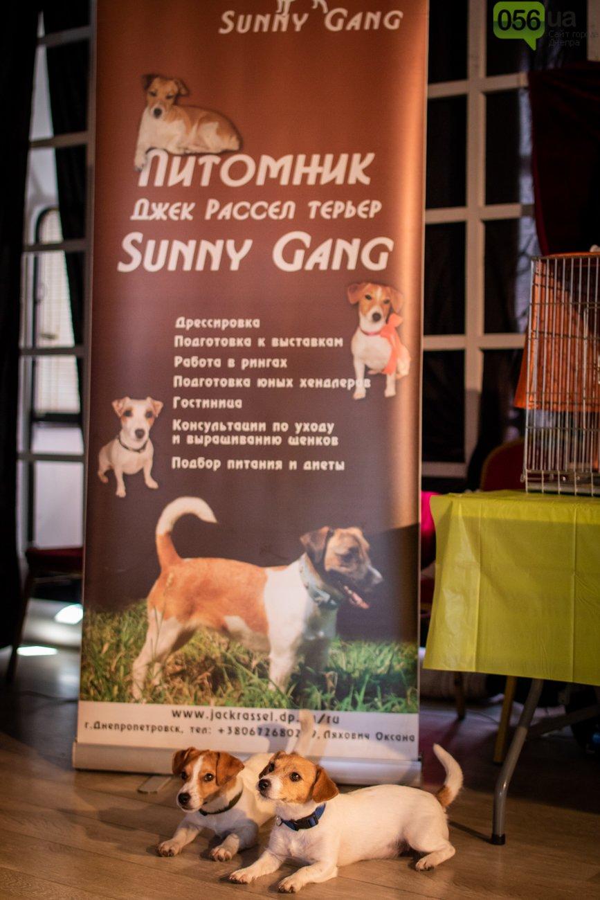 Собаки, кошки и морские свинки: как в Днепре прошел фестиваль домашних животных, - ФОТОРЕПОРТАЖ, фото-18