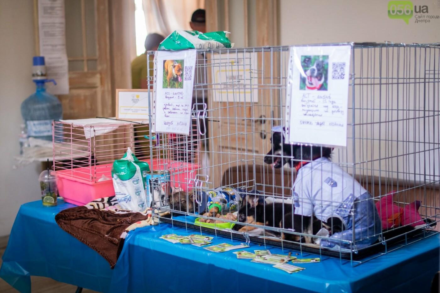 Собаки, кошки и морские свинки: как в Днепре прошел фестиваль домашних животных, - ФОТОРЕПОРТАЖ, фото-16