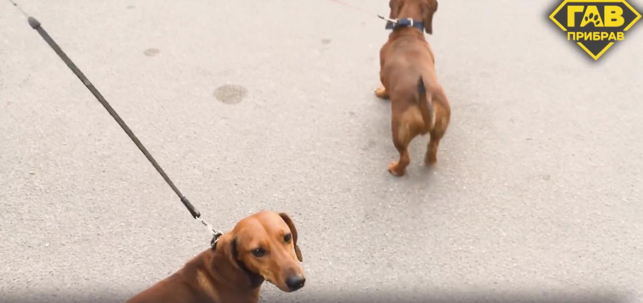 «Зачем сорить, если мы потом сами в этом будем»: 5 историй днепрян, которые убирают за своими собаками, - ФОТО, ВИДЕО, фото-8
