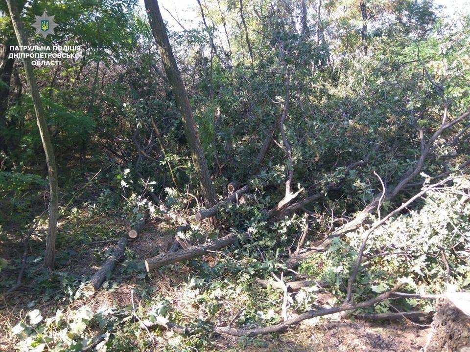 На Днепропетровщине неизвестные уничтожают лесополосу, - ФОТО, фото-5